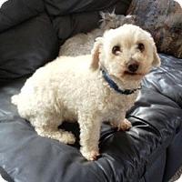 Adopt A Pet :: Casper - Dover, MA