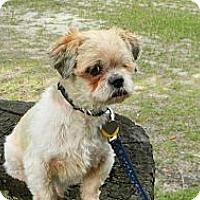 Adopt A Pet :: Pippin - Duluth, GA