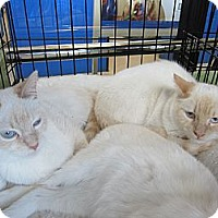 Adopt A Pet :: Flame Boys - Easley, SC