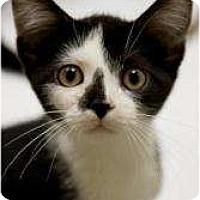 Adopt A Pet :: Isosceles - Chicago, IL