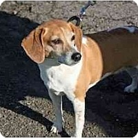 Adopt A Pet :: Preshus - Racine, WI