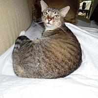 Adopt A Pet :: Lizzy - Royal Palm Beach, FL