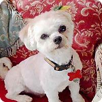 Adopt A Pet :: Finnegan - Los Angeles, CA