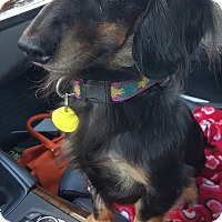 Adopt A Pet :: Oakley - Decatur, GA