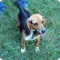 Adopt A Pet :: Kacey - Dumfries, VA