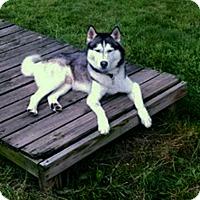 Adopt A Pet :: Titan - Boyertown, PA