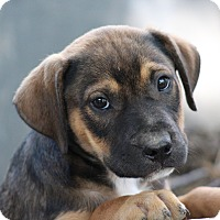 Adopt A Pet :: Grover-ADOPTED - Glastonbury, CT