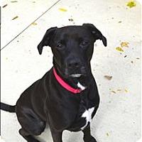 Adopt A Pet :: Aj - Delaware, OH