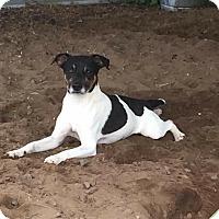 Adopt A Pet :: Gianni - Hinesville, GA