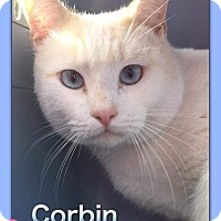 Adopt A Pet :: Corbin - Atco, NJ