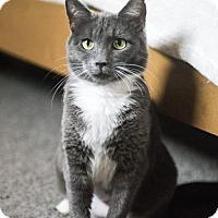 Adopt A Pet :: Chester - Hockessin, DE