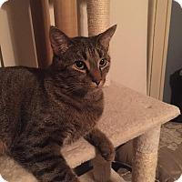 Adopt A Pet :: Hawthorn - Columbus, OH