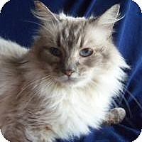 Adopt A Pet :: Miss Elizabeth - Ennis, TX