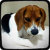 Adopt A Pet :: Joseph - Phoenix, AZ