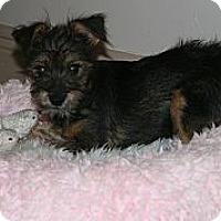 Adopt A Pet :: Calvin - Loxahatchee, FL