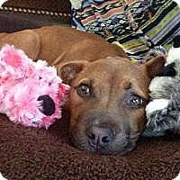 Adopt A Pet :: Piper - Dallas, GA