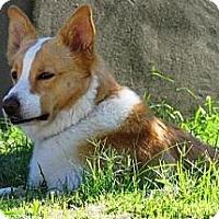 Adopt A Pet :: Dodi - Gilbert, AZ