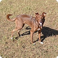 Adopt A Pet :: Lexie - Palmetto, FL