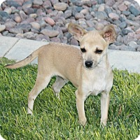 Adopt A Pet :: Deni - California City, CA