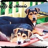 Adopt A Pet :: Annie - Staunton, VA