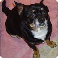 Adopt A Pet :: Luigi - Cleveland, OH
