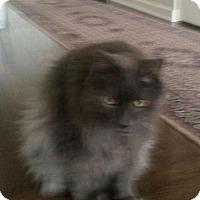 Adopt A Pet :: D.C. - Delmont, PA