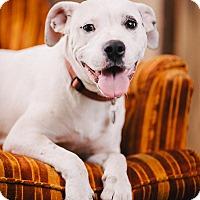 Adopt A Pet :: Starlet - Portland, OR