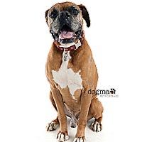 Adopt A Pet :: CRUZ - Fremont, CA