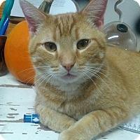 Adopt A Pet :: Chase - Lexington, KY