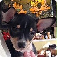 Adopt A Pet :: Rowan - Gainesville, FL