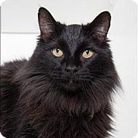 Adopt A Pet :: Dante - San Luis Obispo, CA
