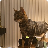 Adopt A Pet :: Mheko - Dallas, TX