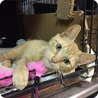 Adopt A Pet :: Cheddar - East Brunswick, NJ
