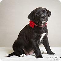 Adopt A Pet :: Aspen - Chandler, AZ