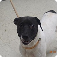 Adopt A Pet :: Kelsy (Lonely Heart) - Gulfport, MS