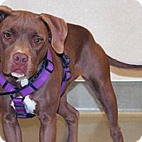Adopt A Pet :: Lilbit - Wildomar, CA