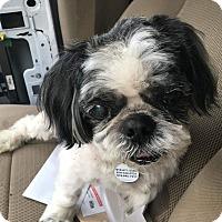 Shih Tzu Dog for adoption in Youngsville, North Carolina - Hobo SPONSORED REDUCED FEE