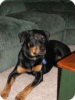 Rottweiler Mix Dog for adoption in Dallas, Texas - CHARLIE