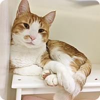 Adopt A Pet :: Toffee - Salisbury, MA