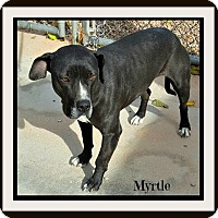 Adopt A Pet :: Myrtle - Tombstone, AZ