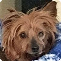 Adopt A Pet :: Wanda - Chesterfield, MO