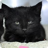 Adopt A Pet :: Zipper - Northbrook, IL
