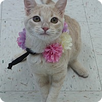 Adopt A Pet :: Tracey - Chambersburg, PA