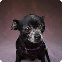 Adopt A Pet :: Gwen - San Antonio, TX