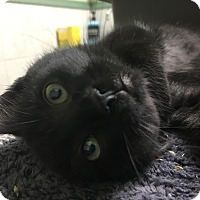 Adopt A Pet :: Malcom - Tucson, AZ