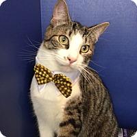 Adopt A Pet :: Hemingway - Pasadena, TX