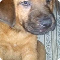 Adopt A Pet :: Wayne - Kimberton, PA