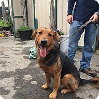 Adopt A Pet :: Bubba - Fallbrook, CA