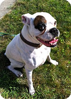 Boxer Mix Dog for adoption in Grafton, Massachusetts - Petey - Foster Home Needed