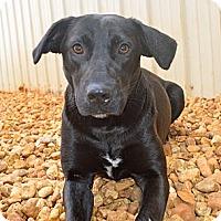 Adopt A Pet :: Patsy - Marietta, GA